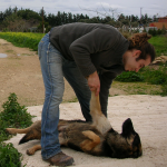 osteopathy osteopath paphos polis cyprus dogs